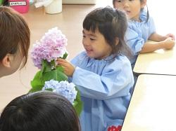幼稚園 あじさい 6月6日(水)