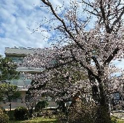 4/25(木)    入学説明会